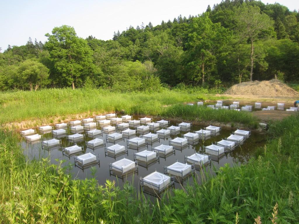 五十嵐実験池